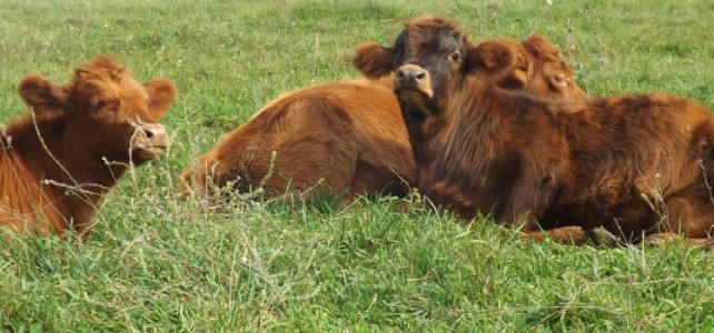 Benefits of Managed Intensive Grazing Systems